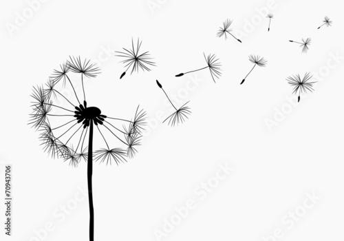 Obraz dandelions - fototapety do salonu