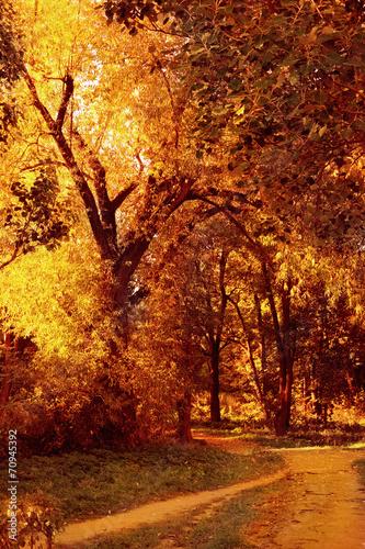 Fototapeta Colorful autumn obraz na płótnie