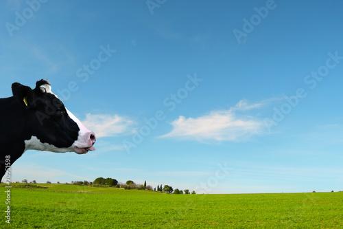Fényképezés prato verde con mucca che fa la linguaccia