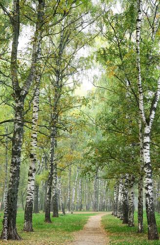 ranek-droga-przemian-w-mgly-jesieni-brzozy-parku
