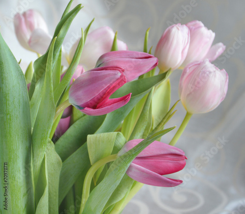 Wall Murals Tulip Light-pink tulips