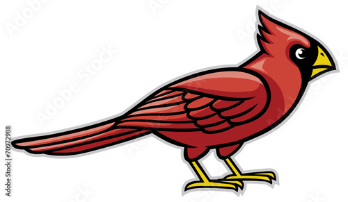 Fotografija cardinal bird