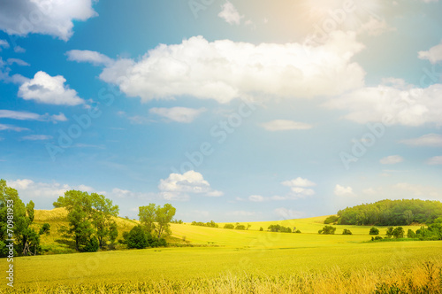 Foto op Plexiglas Weide, Moeras landscape with yellow field and blue sky, nature background