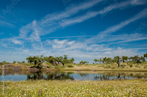 Valokuva  Pastures and pond. Extremadura, Spain. Oak trees and blue sky
