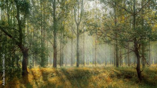 Rays of sun among the trees