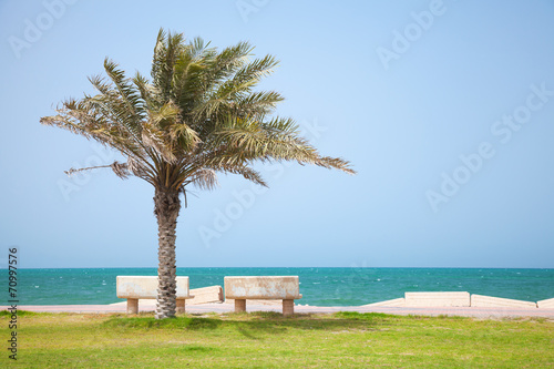 Fotografia, Obraz  Date tree on the coast of Persian Gulf, Saudi Arabia