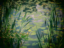 A Filtered Close Up View Of Water With Lily Pads In A Swamp