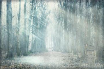 Fototapetamystical forest fog