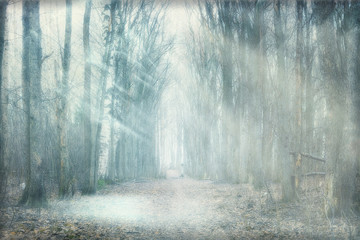 Fototapeta mystical forest fog
