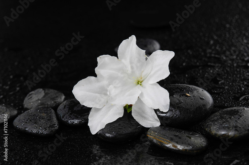 Still life with white lily \with therapy stones