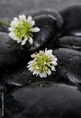 bialy-tropikalny-kwiat-i-kamienie-na-mokrym-tle