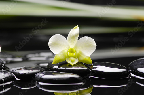 Poster Spa white orchid and black stones on green thin bamboo grove