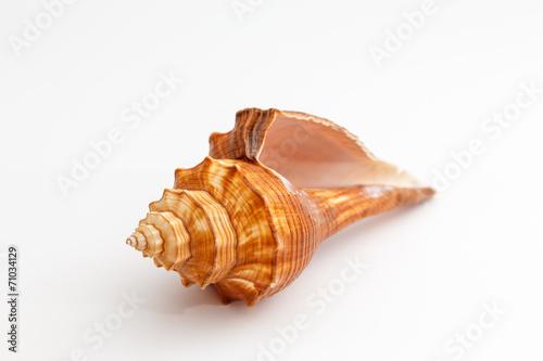 Fotografía  seashell