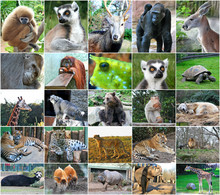 Collage Photos Of Some Wild An...