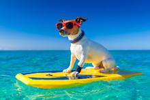 Surfer Dog
