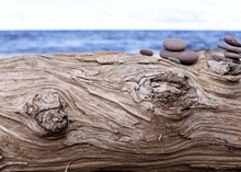 Lake Superior Driftwood With R...