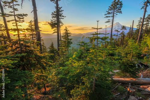 Foto op Canvas Bomen Beautiful Vista of Mount Hood in Oregon, USA.