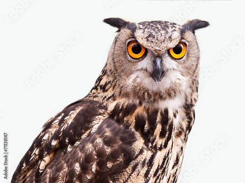 In de dag Uil Eagle Owl