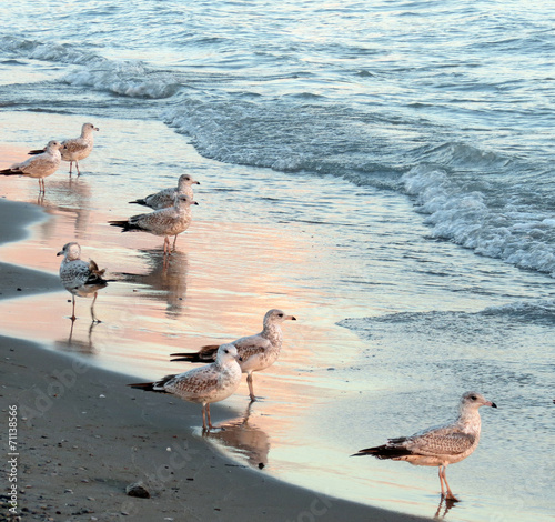 Sunset casts a pink glow on water and seagulls