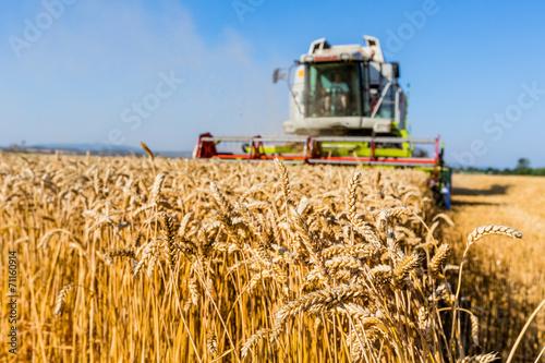 Fotografie, Obraz  Getreidefeld mit Weizen bei der Ernte
