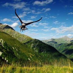 Fototapeta Góry predator