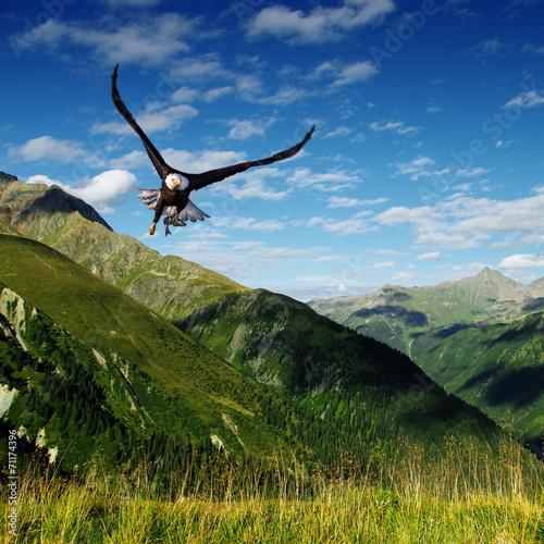 In de dag Eagle predator