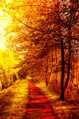 Panel Szklany Podświetlane Inspiracje na jesień autumn fall