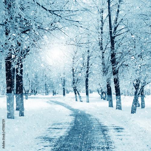 Printed kitchen splashbacks Light blue Winter nature, snowstorm