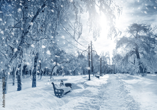 zimowa-przyroda-snieg-w-parku