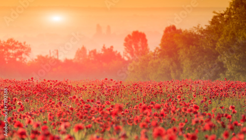 Canvas Prints Coral red poppy field