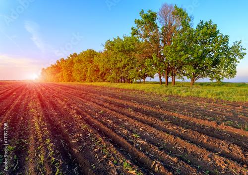 Foto auf Gartenposter Landschappen agricultural field