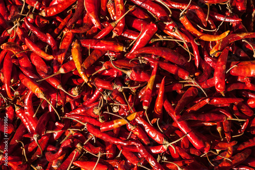 Foto auf Gartenposter Hot Chili Peppers Red spicy chili peppers
