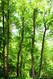 Piękne drzewa w lesie