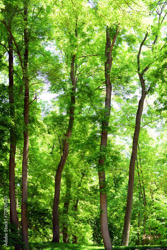 piekne-drzewa-w-lesie