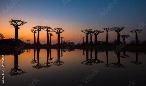 Sunset over Alley of the baobabs, Madagascar. Fototapet