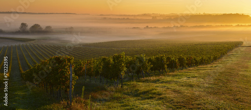 Photo sur Aluminium Vignoble Vineyard Sunrise