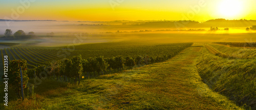 Canvas Prints Honey Vineyard Sunrise
