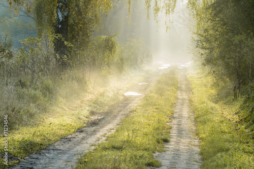 droga wiejska w świetle mglistego poranka - 71234546