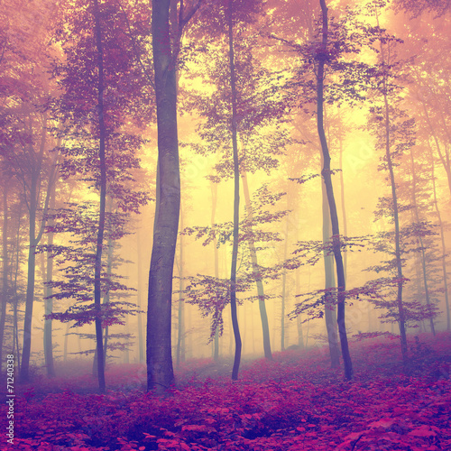 vintage-autumn-forest
