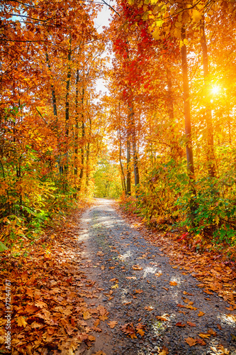 Tuinposter Weg in bos Autumn forest