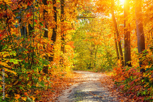 Photo Stands Road in forest Autumn forest