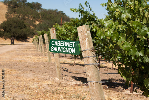 Fotografie, Obraz  Cabernet Sauvignon grapes growing in California