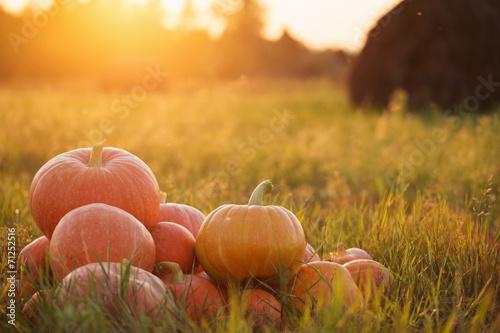 Foto op Canvas Herfst pumpkins outdoor