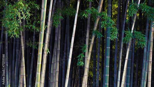 bambusowa-dzungla-tropikalny-las