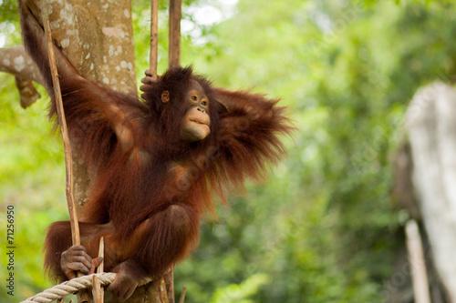Foto op Plexiglas Aap chimpanzee