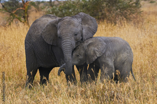 Foto op Canvas Olifant Elephant brothers