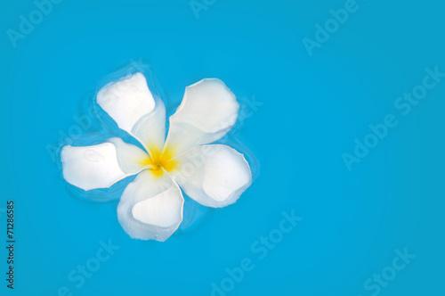 Spoed Foto op Canvas Iris Frangipani flower floating on blue water