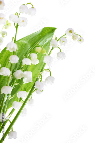 Poster Muguet de mai Lilies of the valley