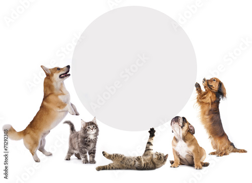 Poster Chien cats and dogs holding a cork banner