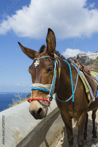 Fototapety, obrazy: île de Santorin Cyclades Grèce